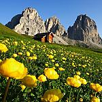 Val di Fassa - Summertime  - Happy run through flowering meadows and let your fantasy run with you!