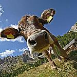 Val di Fassa and wildlife - The easiest