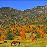Everywhere nature, colours and horses