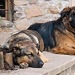 Sleeping corner of the dogs
